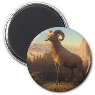 una oveja de montaña rocosa, Bierstadt Albert Imán Redondo 5 Cm