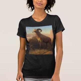 una oveja de montaña rocosa, Bierstadt Albert Camiseta