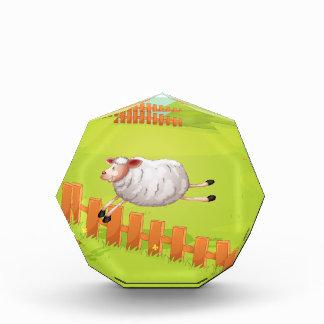 una oveja en una granja