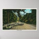 Una oveja principal del pastor en una carretera de poster
