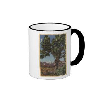 Una palma de Joshua en la floración en desierto ca Taza De Café