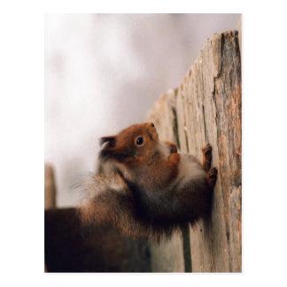 Una pequeña ardilla europea (Sciurus vulgaris) si Tarjetas Postales