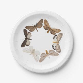 Una placa de la polilla platos de papel