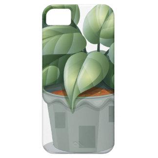 Una planta en un pote iPhone 5 fundas