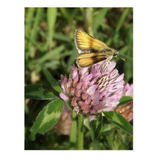 Una polilla pequenita en una flor pequenita postales