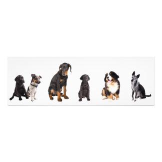 una porción entera de perros cojinete