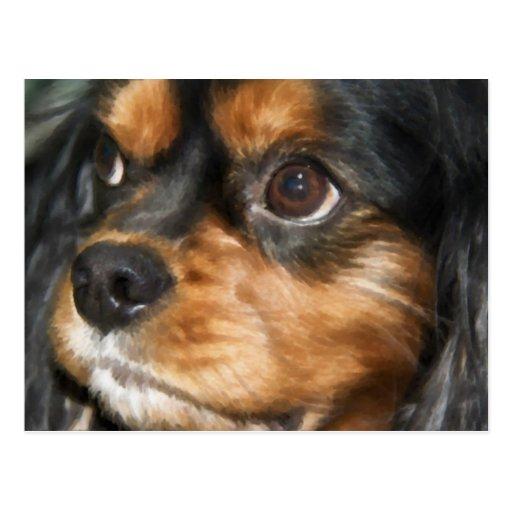 Una postal arrogante del perro de aguas de rey Cha
