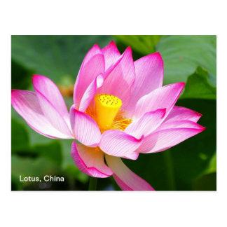 una postal de Lotus en China