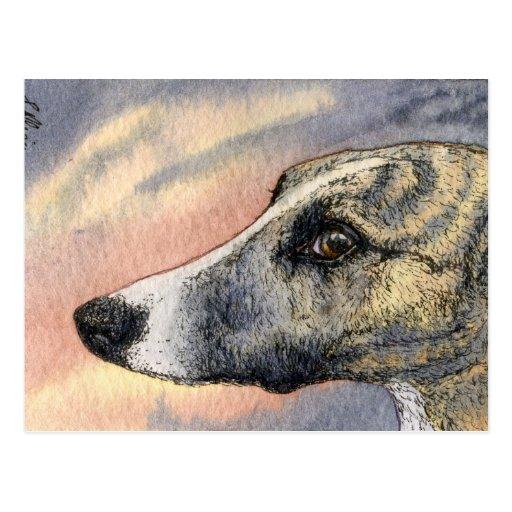 Una POSTAL tímida, hermosa del perro