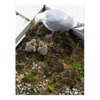 Una postal vieja de los polluelos de la gaviota