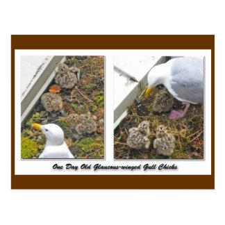 Una postal vieja de los polluelos de la gaviota de