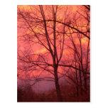 Una puesta del sol del invierno tarjeta postal