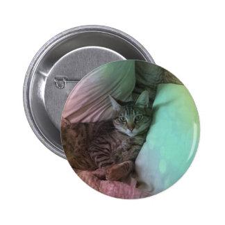 Una qué vida cubrió la foto del gato pin