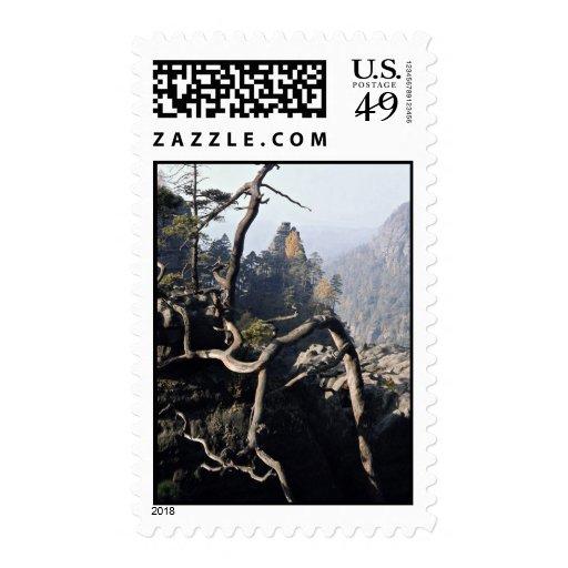 Una raíz del árbol con el valle rocoso detrás, Che