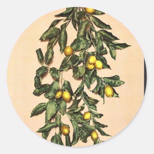 Una rama de limones, Limone, Garda, lago de, Pegatina Redonda