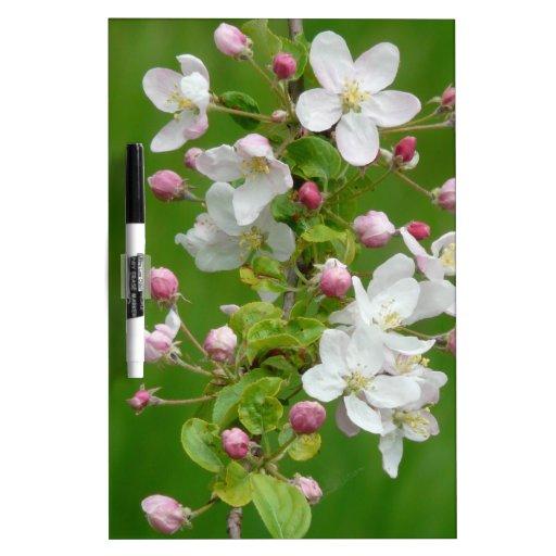 Una rama del flor de Apple Pizarras Blancas