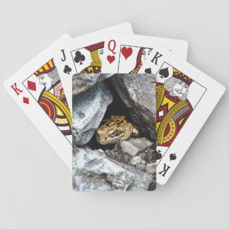 Una rana manchada oculta entre las rocas en una cartas de póquer