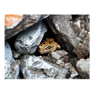 Una rana manchada oculta entre las rocas en una postal