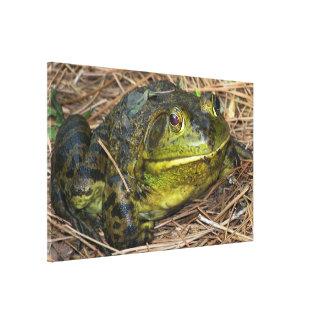Una rana tan preciosa impresiones en lona
