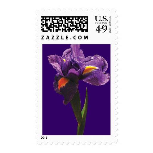 Una reserva púrpura del iris la fecha envio
