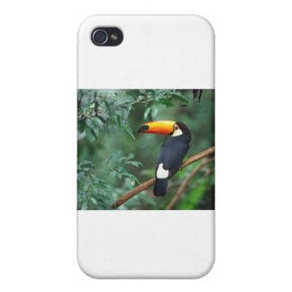 Una ropa preciosa con una criatura preciosa iPhone 4 fundas
