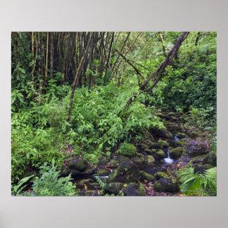 Una selva tropical incluye los helechos, una corri poster