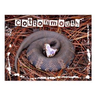 Una serpiente del este venenosa del Cottonmouth Tarjetas Postales