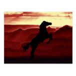 Una silueta del caballo que se alza postal