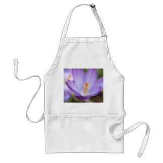 Una sola flor del azafrán delantal