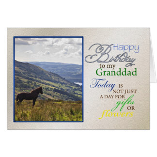Una tarjeta de cumpleaños del caballo para el