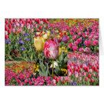 una tarjeta del tulipán