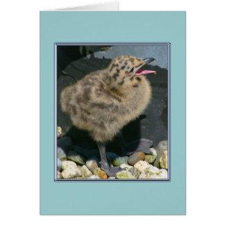 Una tarjeta vieja del polluelo de la gaviota de la