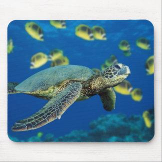 Una tortuga de mar verde nada más allá de una escu tapetes de raton