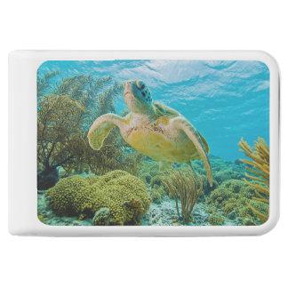 Una tortuga verde en los filones bajos de Bonaire