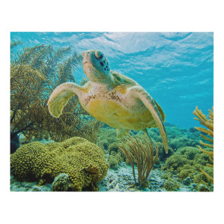 Una tortuga verde en los filones bajos de Bonaire Cuadro