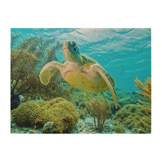Una tortuga verde en los filones bajos de Bonaire Cuadro De Madera