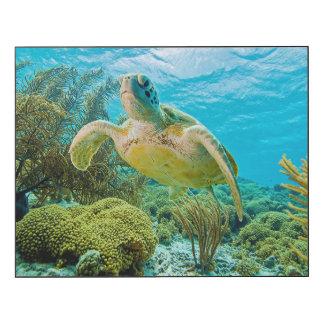 Una tortuga verde en los filones bajos de Bonaire Impresión En Madera