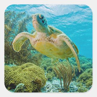 Una tortuga verde en los filones bajos de Bonaire Pegatina Cuadrada