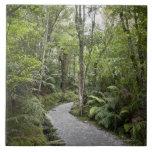 Una trayectoria a través de una selva tropical en  teja  ceramica