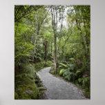 Una trayectoria a través de una selva tropical en  impresiones