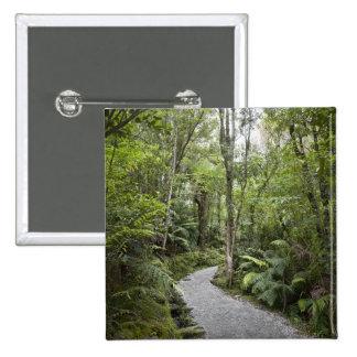 Una trayectoria a través de una selva tropical en pins