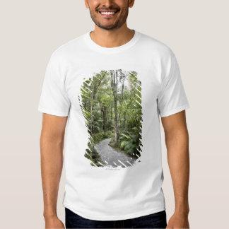 Una trayectoria a través de una selva tropical en poleras