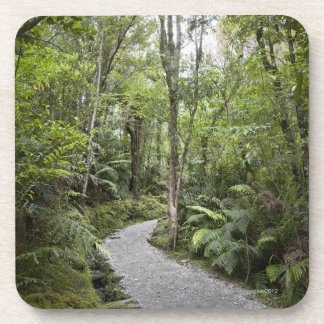 Una trayectoria a través de una selva tropical en  posavasos de bebida