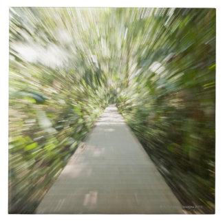 Una trayectoria de madera a través de la selva tro azulejo