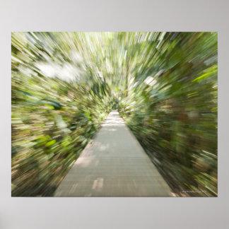 Una trayectoria de madera a través de la selva tro posters