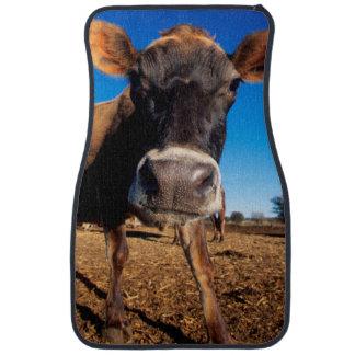 Una vaca del jersey que es inquisitiva alfombrilla de auto