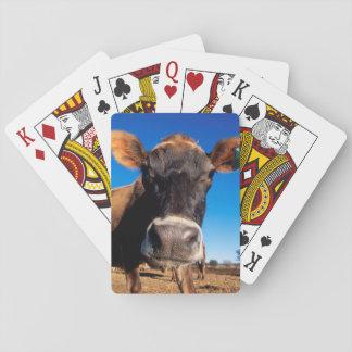 Una vaca del jersey que es inquisitiva baraja de cartas