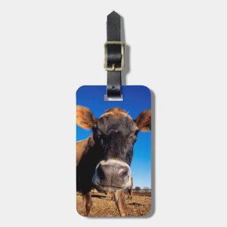 Una vaca del jersey que es inquisitiva etiquetas para maletas