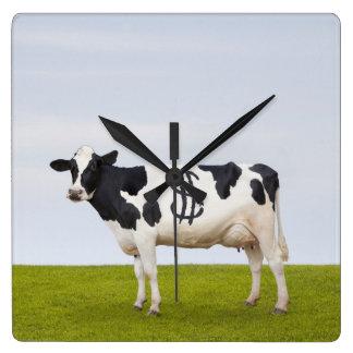 Una vaca lechera de Holstein con los puntos en la Reloj Cuadrado
