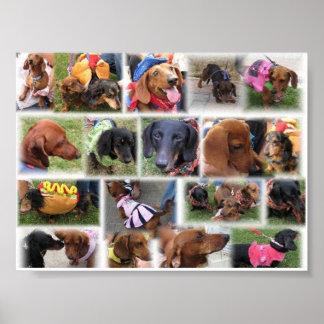 Una vida de los perros poster